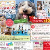 4月27日(土) 『暮らしタイムス』に4-DOGSが掲載されます!(^^)!  新聞をとってる方は、折込チラシをチェックして下さいね☆ …