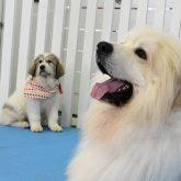 4-DOGSから重要なお知らせです!! 目から鱗なBIG NEWS(@_@。   なんと、なんとですよ… 室内ドッグランの料金が改定いた…