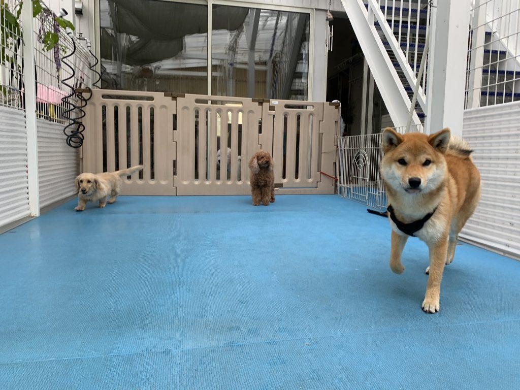 ホテル☆犬生初お泊まりもenjoy♡