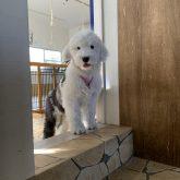 こんにちは(●^o^●) 突然ですが、4-DOGSからのBIGニュースです!(^^)! ・・・最近BIGニュースが多い気がする・・・(笑) &nb…