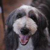 こんにちは☆ 4-DOGSからのお知らせです(●^o^●)♪  とてもありがたいことに 3月29日(日)に開催を予定している アニマル…