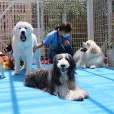 4-DOGSでは一緒に働く仲間を探しています 現在の事業内容はトリミング・ペットホテル・室内ドッグラン・カフェ・畑での農作業です そして今後はペッ…