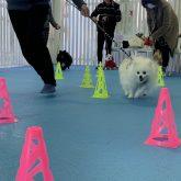 こんにちは(●^o^●) 4-DOGSからのお知らせです☆  しばらく新型コロナウイルスの影響で、自粛をさせて頂いていた しつけ教室を…