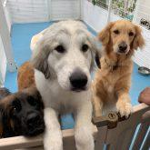 ★BIG NEWS★ みなさ~ん!! こんにちは ご報告申し上げます!! 皆さまに長く支えられ、4-DOGSは 7月6日で12年を迎えることが出来ました♡ 感謝…
