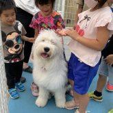 4-DOGSからのイベントのお知らせです☆   大変ありがたいことに4-DOGSは 今年、7月6日で12周年を迎えることが出来ます(*^…