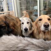 今日はどんより雲な空模様(・。・; ですが今日もエネルギッシュなワンコたちのご来店で 活気あふれる4-DOGSでした☆  …
