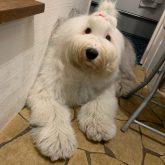 4-DOGSからのお知らせです☆   今までトリミングやホテルにご来店頂いたワンコたちを 毎日ホームページ内、ワンコブログの記事でご紹介…