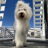 こんにちは☆    1年も早いことに年末も近づいてきましたね(#^.^#) そこで4-DOGSからお願いがあり…